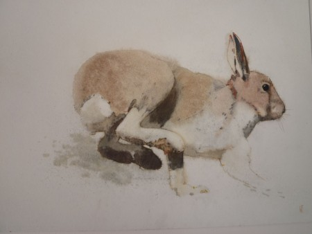 First Hare