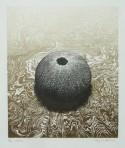 Urchin