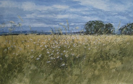 A Summer Field Edge, the Mearns