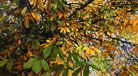 Chaffinch and Horse Chestnut
