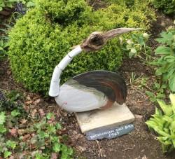 Patagonian Silly Bird