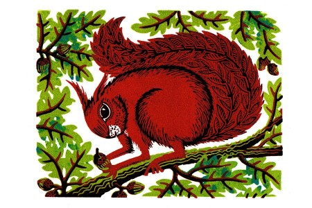 Nut Squirrel