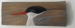 Arctic Tern  ~  Kría