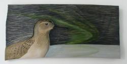 Golden Plover  ~  Heiðlóa