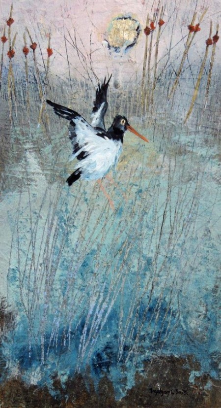 Oystercatcher in the Reeds