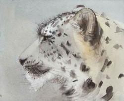 Snow Leopard i