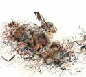 Brown Hare, Winter - Lucy Newton