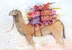 Camel, Morocco II
