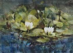 Waterlilies on Lauriston