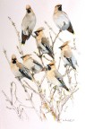 Treetop Waxwings