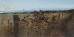 Late Autumn Field Edge