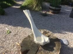 Bone (birdbath)
