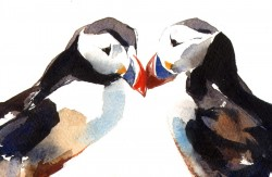 Courting Puffins