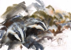Badgers Emerging From the Sett