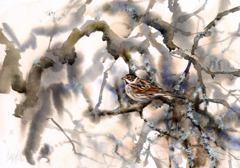 Reed Bunting, January