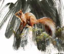 Red Squirrel, Pine Forest