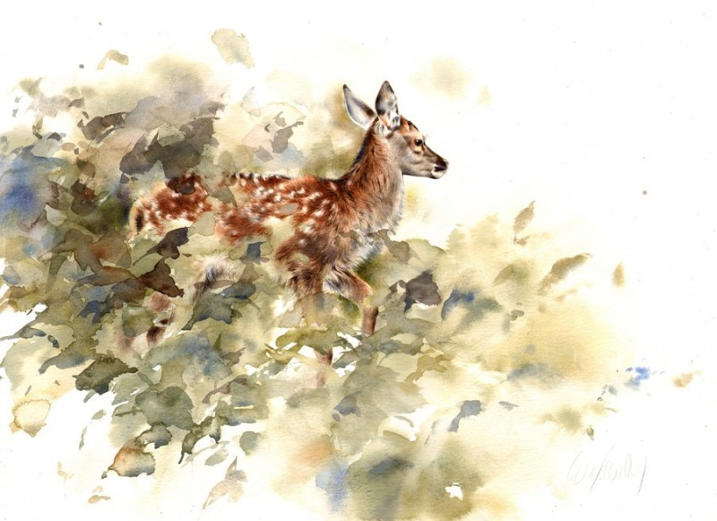 Fawn in Undergrowth