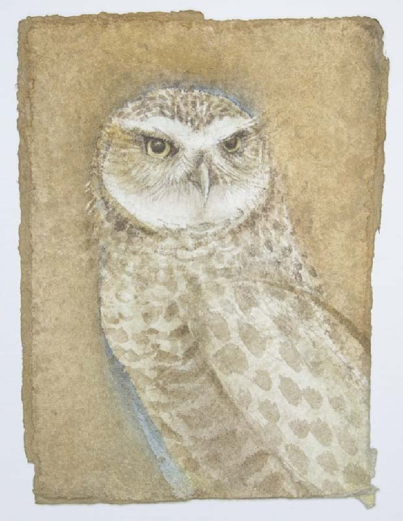 Parliament of Owls: Burrowing