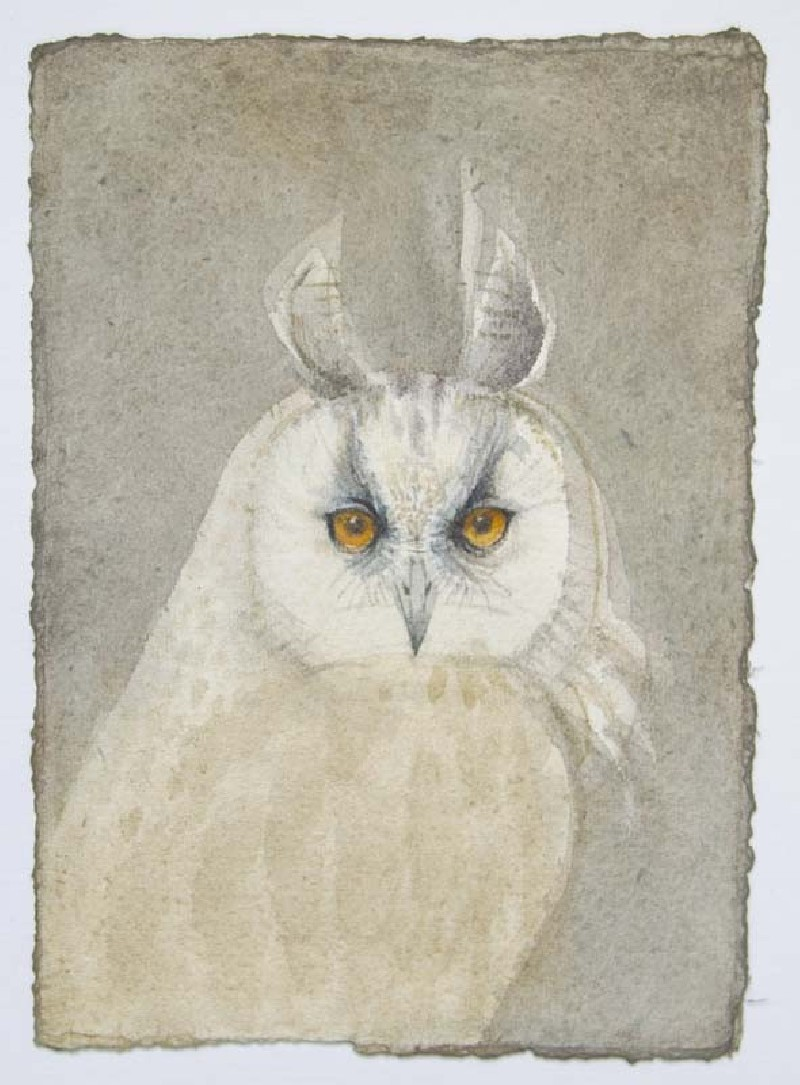 Parliament of Owls:  Long-eared