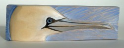 Gannet — Close Up