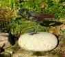 Sharp Bird I