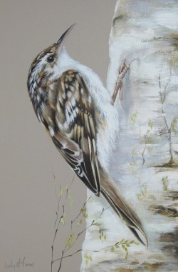Treecreeper on a Birch Tree by Lesley McLaren