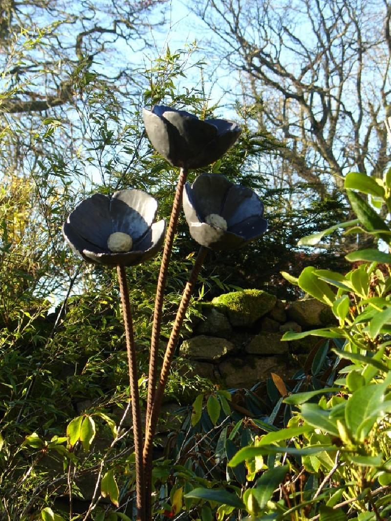 Black Poppies