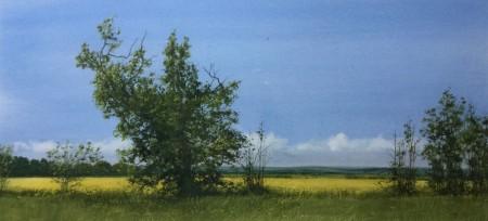 Mearns Treeline, Late June by David E.Johnston