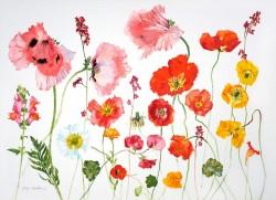 Orange Poppies by Jenny Matthews