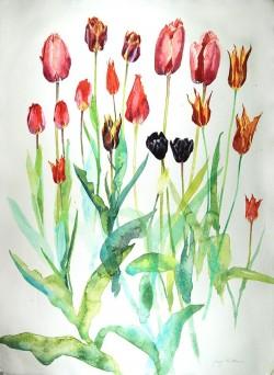 Roscullen Tulips 2016 II by Jenny Matthews