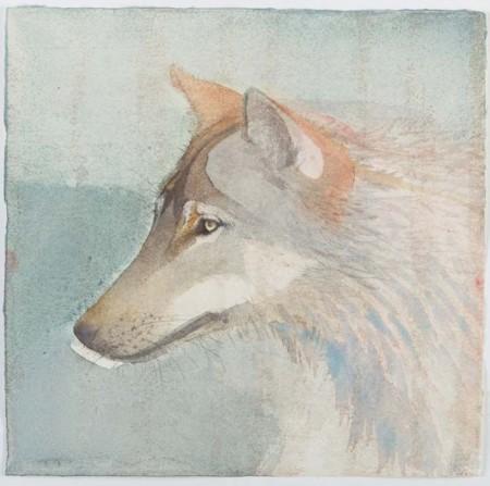 Wolf Portrait by Scottish artist Claire Harkess