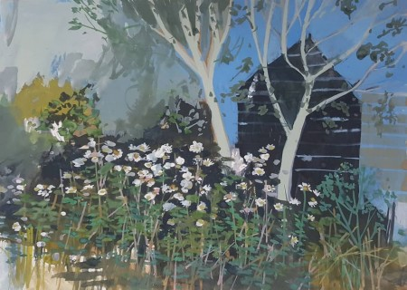 Late Summer Daisies and Black Shed Catterline