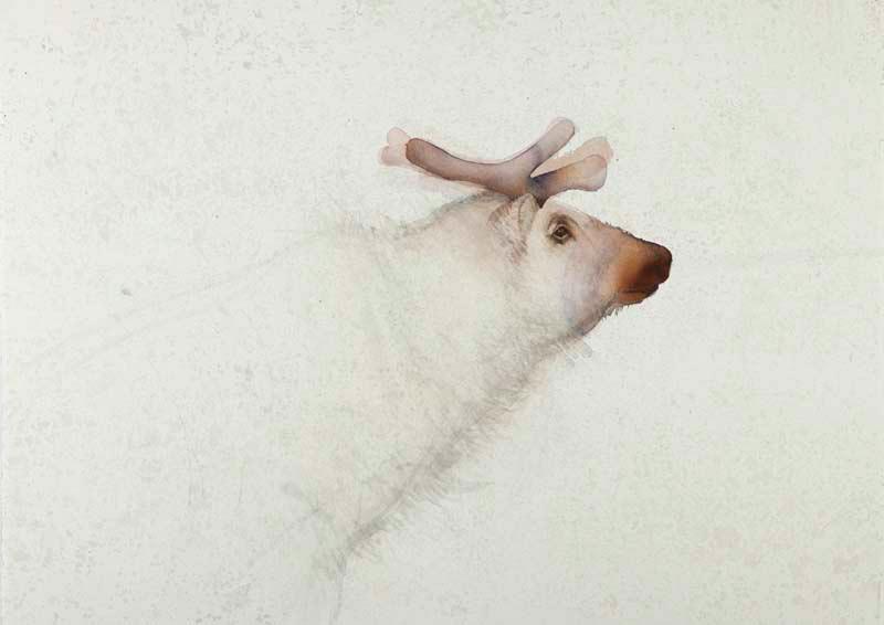 Reindeer, Longyearbyen by  CLAIRE HARKESS RSW